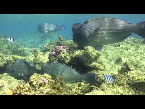 PangeaSeed on Scuba Diving & Conservation_Búvárkodás. Heti legjobbak