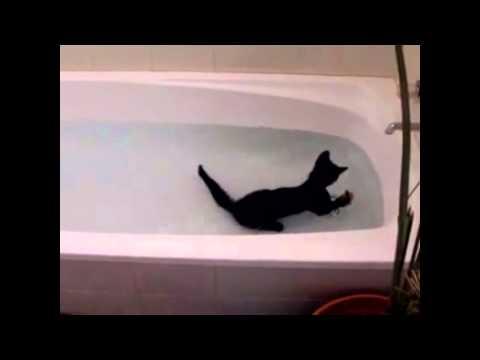 Η γάτα που λατρεύει το κολύμπι στη θάλασσα!