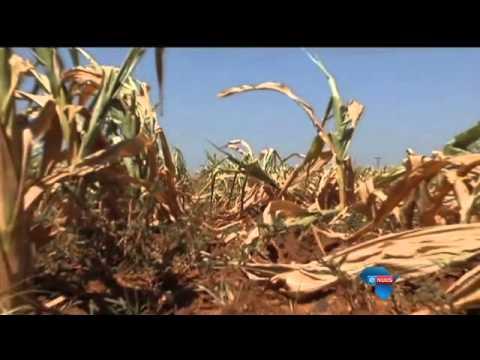 """""""SA sal mielies moet invoer"""" / """"SA will have to import maize"""""""
