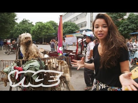 dining - Click here to subscribe to VICE: http://bit.ly/Subscribe-to-VICE Southern China has always had a tradition of dining on dogs—people from other parts of the country even joke that Southerners...