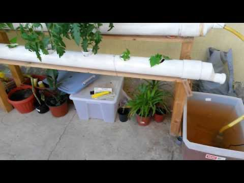 شرح نظام الزراعة المائية hydroponic system