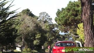 #894 Vielfalt bei Strassenbäumen - Breitseite gegen europäische Pflanzungen