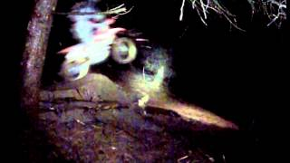 8. 2013 honda crf 150 jump