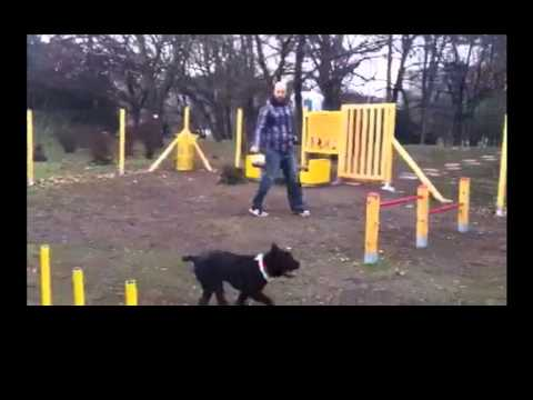Nero first steps in agility