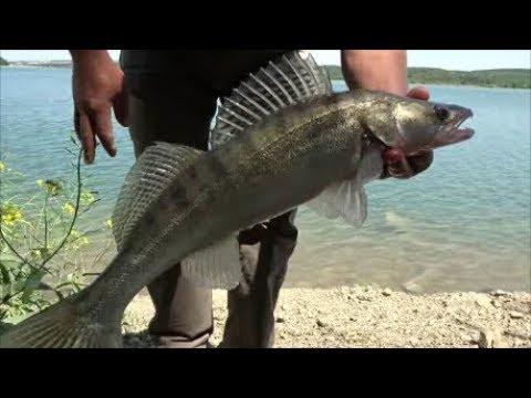 рыболовный магазин крым судак