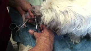 Helping a dog have puppies with Dr Greg and Robin