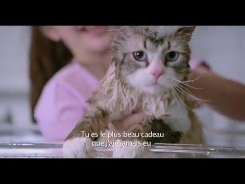 Les Neuf Vies de Mr. Fuzzypants - Teaser (VOST)