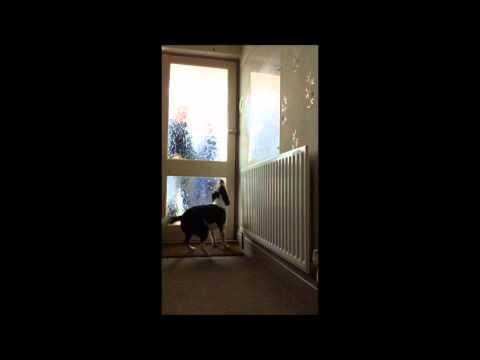 il-cane-canguro