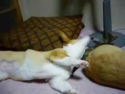 「犬と猫のプロレス」のイメージ