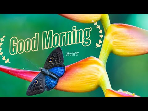 Nice quotes - Good morning status  Good morning WhatsApp Status