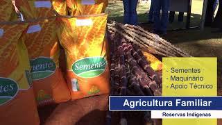 Ação da Agricultura já atendeu 27 produtores na Aldeia Jaguapiru