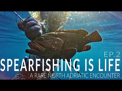 "Spearfishing Croatia 2019 - Spearfishing is Life EP.2 - ""A rare North Adriatic encounter"""
