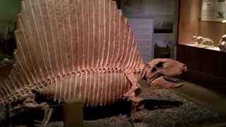 Thermopolis (WY) United States  city photos gallery : Wyoming Dinosaur Center - Thermopolis, WY