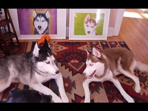 TALKING DOGS DEBATE ART%21 - SUBTITLED
