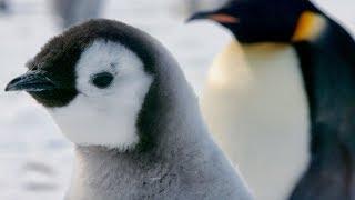 水中で泳ぐペンギンの姿を撮影した本編映像が解禁!/映画『皇帝ペンギン ただいま』特別映像