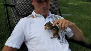 My 5 pet chipmunks... Alvin, Simon, Theodore and the Twins fighting over peanuts. - YouTube