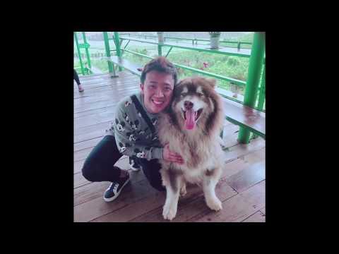 Trấn Thành chụp ảnh cùng chú chó siêu kích thước ở ĐÀ LẠT - Thời lượng: 1:05.