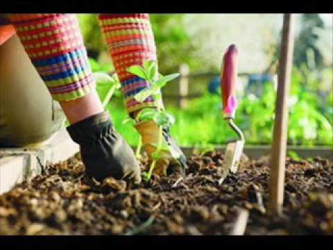 И в саду и в огороде - 15.05.17 Советы садоводам