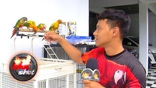 Video Hardi Fadhillah Dicakar Burung Peliharaannya - Hot Shot 07 April 2017 MP3, 3GP, MP4, WEBM, AVI, FLV April 2019