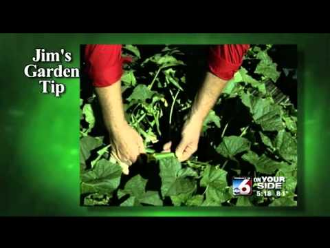 Jim's Garden Tip - Harvesting Your Crops