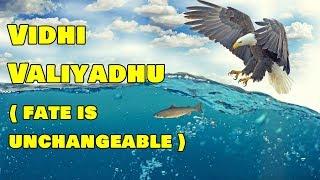 Video விதி வலியது | Mahabharatham Story in Tamil | Indian Mythology Stories in Tamil MP3, 3GP, MP4, WEBM, AVI, FLV Agustus 2018