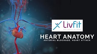 Human Heart Anatomy Animation