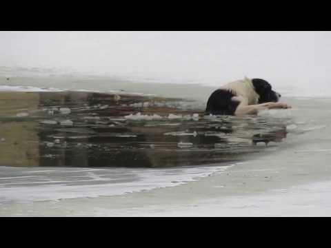 狗狗掉冰池無力上岸 半裸男奮身營救