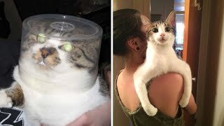Science Is Explaining The Puzzling Behaviors Of Cats by Did You Know Animals?