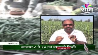 Video Hiralal Patil's organic ladies finger(bhendi) farming success story MP3, 3GP, MP4, WEBM, AVI, FLV Agustus 2018