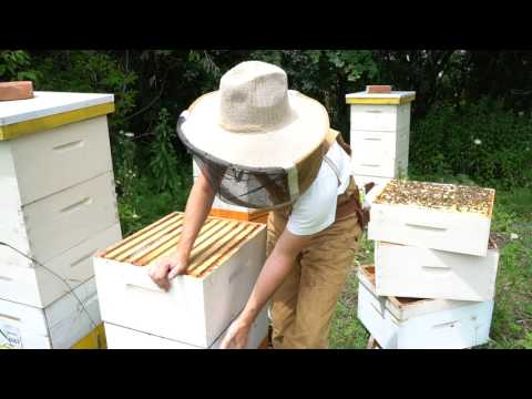 Why Managing Bee Hives As Single Brood Chambers Works