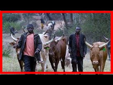 Breaking News | Fulani Herdsman Caught Having S*x With A Cow In Abuja (VIDEO)