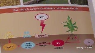 UTEC®, il fertilizzante con inibitore dell'ureasi NBPT: urea ad alta efficienza