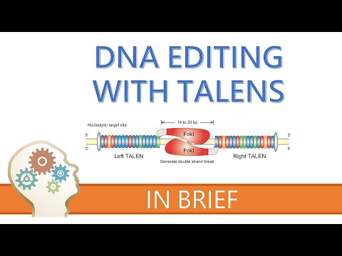TALENs - TALE NUCLEASES - GENE EDITING EXPLAINED!