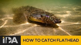 Mallacoota Australia  City new picture : How To Catch Flathead - Mallacoota Esturay Fishing