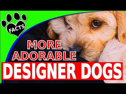 Today's Top 10 Most Adorable Designer Dog Breeds Part 2 Dogs 101 - Animal Facts (видео)