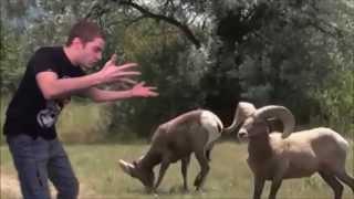 SLG N°89 (sample) - Mathieu Sommet engueule un mouflon