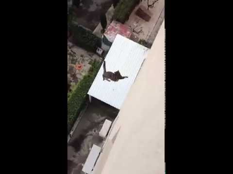 Cat Falls Off From Roof Top