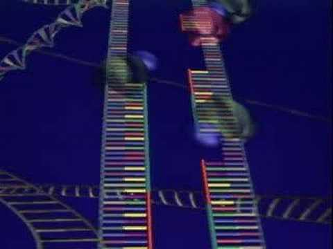 Protein Synthesis, DNA Replication