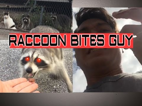 BAD IDEA: Man Feeds Wild Raccoon and Shows Us Exactly Why This is Not a Good Idea!