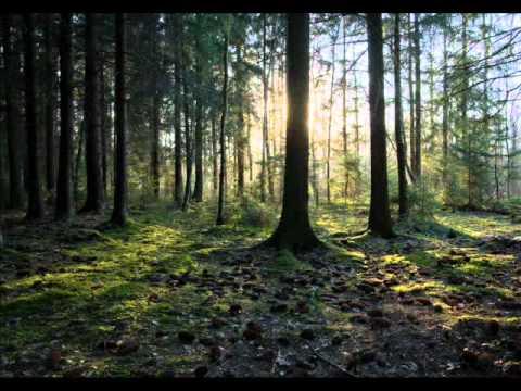 James Last - Вечерняя серенада (Франц Шуберт).wmv (видео)