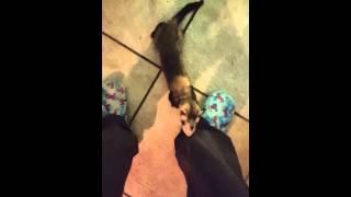 Oh ferret - YouTube