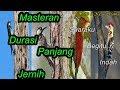 Download Lagu Kumpulan Masteran Burung Pelatuk Joss Gandos SUARA JERNIH & RAPAT Mp3 Free