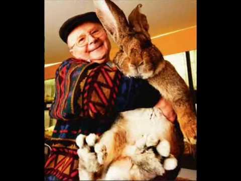 Grootste konijn ooit!