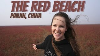Panjin China  City new picture : The Red Beach | Panjin, China | Wheelee's Travels