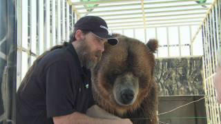 Video Celebrity Grizzly Brody The Bear Says Thanks To Nutramax Laboratories MP3, 3GP, MP4, WEBM, AVI, FLV Mei 2017