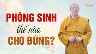 Phóng Sinh Thế Nào Cho Đúng?   Vấn Đáp Phật Pháp Chùa Ba Vàng