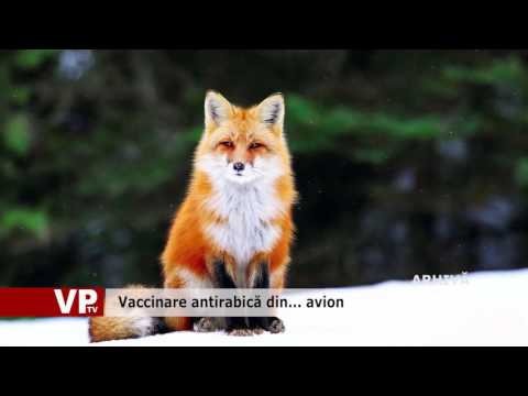 Vaccinare antirabică din… avion