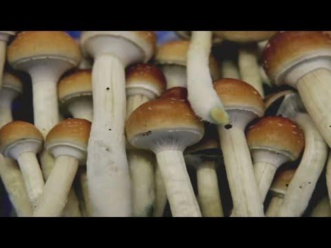 Oregon voters approve Measure 109, psilocybin mushrooms for therapeutic use