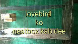 Lovebirds Ko lab nest box de