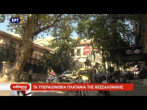 Υπεαιωνόβιοι πλάτανοι μέσα στη Θεσσαλονίκη | 15/10/2018 |ΕΡΤ